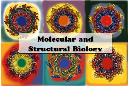 Molecular and Structural Biology=
