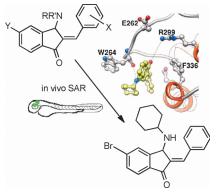 in vivo structure