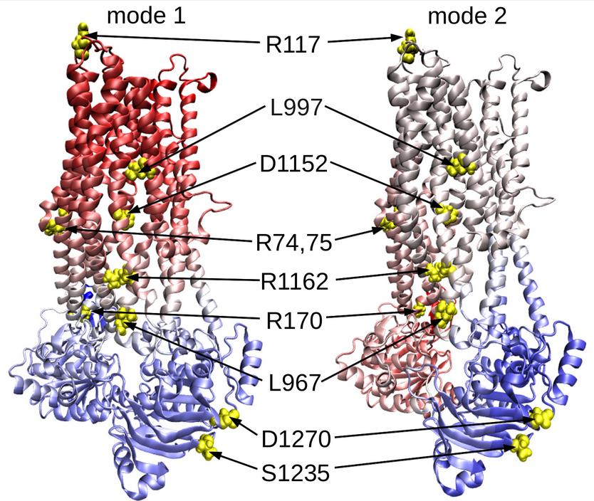 mechanisms of CTFR