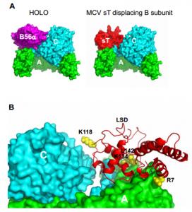 camacho restricted protein 2015...